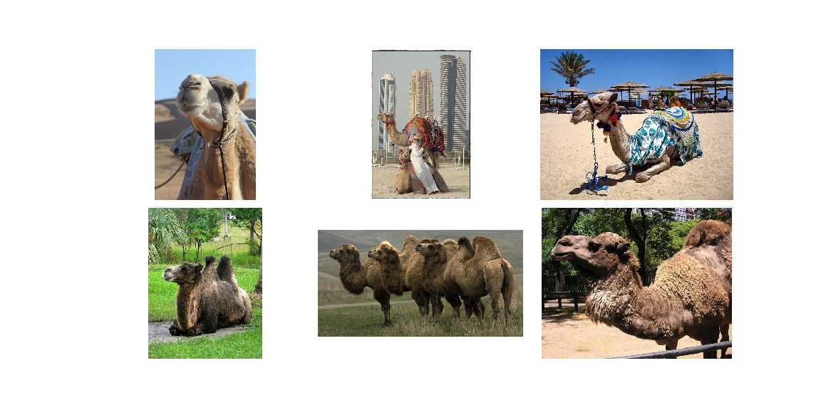 Camels and Camels